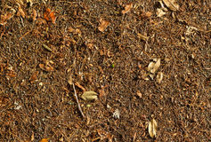 Leaves & Needles. Dry Leaf Texture with a bit of green in it Royalty Free Stock Image
