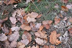 Leaves, needles, wood and cones background royalty free stock image