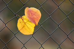 Leaves the network Royalty Free Stock Images