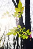 Leaves. New York Nature Royalty Free Stock Photography