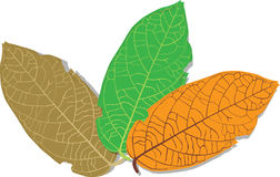 28-Leaves-NK1. Leaves forest green Brown Orange object Stock Photography