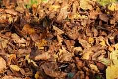 Leaves in november, autumn background Royalty Free Stock Images