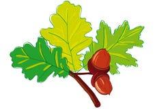 Leaves oak Stock Images