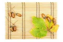 Leaves of oak acorns Stock Photos
