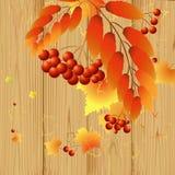 Leaves och bär Arkivfoton