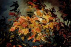 Leaves of october. Leaves of colour with reflections in water Stock Images