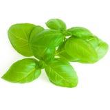 Leaves Of Basil Isolated On White Background Royalty Free Stock Photo