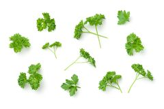 Free Leaves Of Parsley Isolated On White Background Royalty Free Stock Photo - 108907505