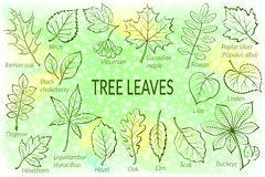 Leaves Of Plants Pictogram Set Royalty Free Stock Photo