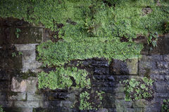 Leaves on old brick wall. Old and wet brick wall with leaves under bridge royalty free stock image