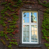 Leaves on old brick wall and window. Nature. Royalty Free Stock Images