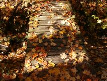 Leaves on old footbridge. Autumn leaves strewn across old footbridge royalty free stock photography