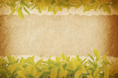 Leaves and old paper for text and background Royalty Free Stock Photo