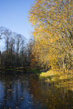 The leaves on the old pond. Petrovskoye, Pushkin mountains Stock Photography