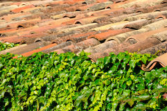Leaves and  old tiles Royalty Free Stock Photo