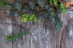 Leaves on Old wood background Royalty Free Stock Image