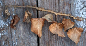 Leaves on Old wood background Royalty Free Stock Images