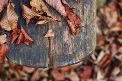 Leaves on old wooden bench Stock Images