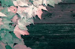 Leaves on Old Wooden Boards - Infrared Stock Photo
