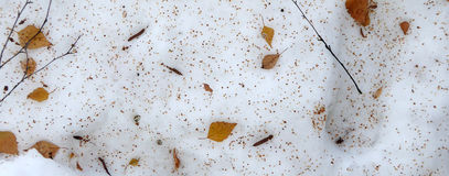 Free Leaves On A Snow Stock Photography - 48546992