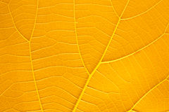 Leaves orange leaf Stock Image