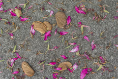 The leaves of the Orchid Tree flower on the cement floor Stock Photo