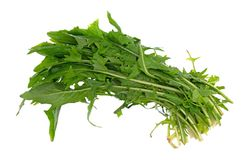 Leaves of organic dandelion greens on a white background. Top view of several leaves of organic dandelion greens isolated on a white background royalty free stock image
