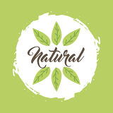Leaves organic icon Stock Photos