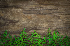 Leaves of Oriental Arborvitae on wood board. Leaves of Oriental Arborvitae decorated on wood board with space Stock Photos