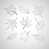 Leaves outline Royalty Free Stock Photo