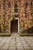 Leaves over old house door at autumn Stock Images