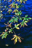 Leaves over water Royalty Free Stock Photography