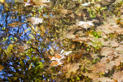 Leaves over the water Stock Photography