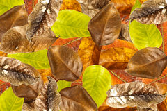Leaves overlap background Royalty Free Stock Images