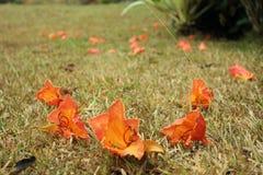 Leaves på gräs Arkivfoto
