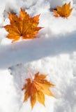 Leaves på snow Royaltyfri Foto