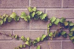 Leaves på väggen Arkivfoton