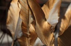 Leaves painted in gold color outside restaurant. In Umea city 2019 royalty free stock images