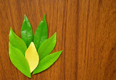 Leaves. Painting nature by leaves and wood Stock Photo