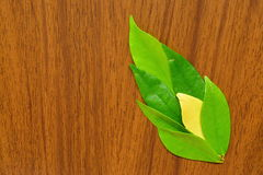 Leaves. Painting nature by leaves and wood Stock Photos