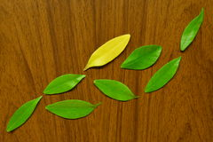 Leaves. Painting nature by leaves and wood Royalty Free Stock Photo