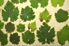 Leaves. Painting nature by leaves and wood Royalty Free Stock Images