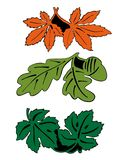 Leaves in pair - colored. Different colored leaves, vectorized plants. Maple, oak and vine leaves. Can be used as printings on plates, table tops, cans, stickers Stock Photo