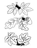 Leaves in pair - outline. Different colored leaves, vectorized plants. Maple, oak and vine leaves. Outlined, no interior. Can be used as printings on plates Stock Photography