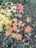 Leaves- palette of colors royalty free stock image