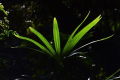 Leaves of palm. Beautiful green leaves of palm Stock Images