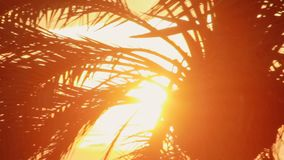Leaves palm branch on background evening sunset. Leaves palm tree on sunset. Leaves palm branch on background evening sunset on sea. Palm tree at sunset in sky stock video footage