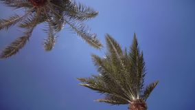 Leaves of the palm grow in the wind, glare from the bright sun. Close up. Leaves of the palm grow in the wind, glare from the bright sun, the sky is clearly blue stock footage