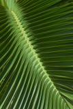 leaves palm pattern tropical Στοκ Εικόνες