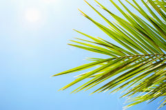 Leaves of palm and sun light Stock Image